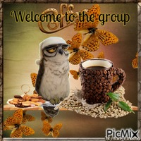 welcome owl