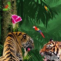 du Rififi chez les tigres