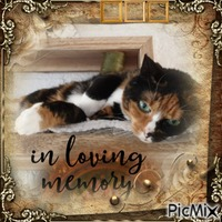 how much I loved her. my sweet cat sweety rip 12-10-2020