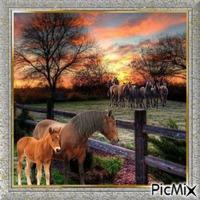 Sonnenuntergang auf der Pferdekoppel