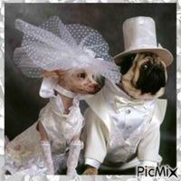 Mariage de chiens