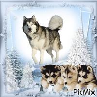 chienne et ses petits