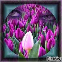 Champs de tulipes !!!!