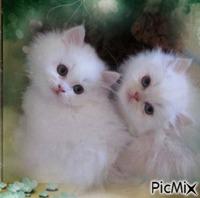 Mes deux chats blancs