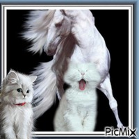 Cheval blanc et chat blanc