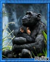 Amour maternel dans la nature