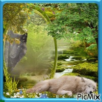 Wolve in Forest