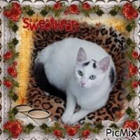 my beautiful sweet cat snowy