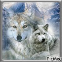 Loups.