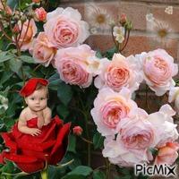 babás rózsa