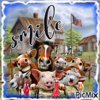 "Farm animal and ""Smile"""