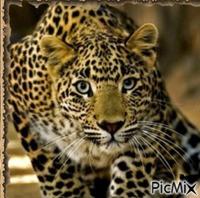 Léopard en Afrique