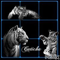 créations-caticha