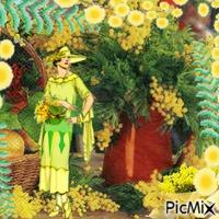 le parfum de mimosas