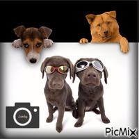 Les chiens !!!