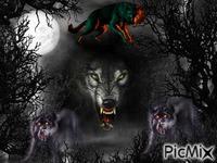 dark wolf night