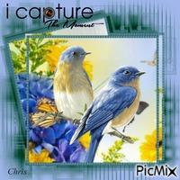 Printemps et oiseaux