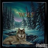 Lobo/Wolf