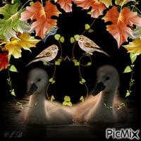 Herbstschwänchen