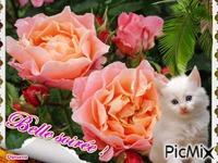 Les roses de mon jardin !