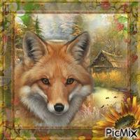 Fuchs in seinem Revier