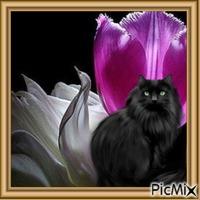Black Cat Framed
