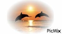 dauphin sur la mer