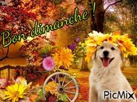 Les feuilles et le chien !