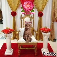Princess Zivka