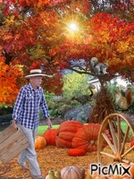Time To Harvest His Pumpkins