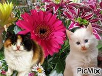 Chats et fleurs