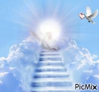 je suis une colombe messagère qui viens t'offrir ce message a toi petit ange