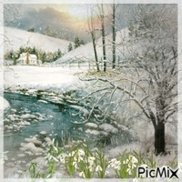 Schneeglöckchen im Winter