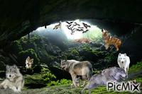 Clan de loup