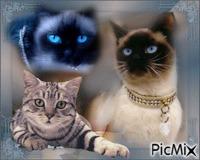 j'adore les chats !