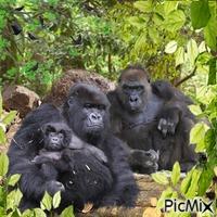 Les primates.