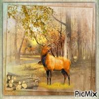 Hirsch auf einer Waldlichtung