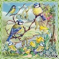 Frühling und Vögel