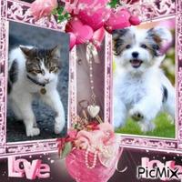 Chien et chat dans cadre rose