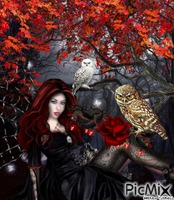 GOTHIC OWL