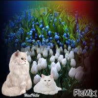 fleurs et chats