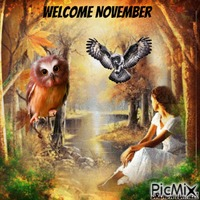 welcome November owl