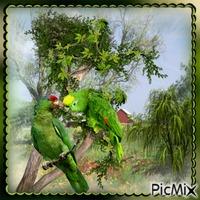 Papageien lieben