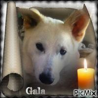 Hommage à Gala
