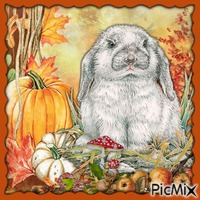 Ein Kaninchen im Herbst