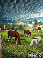 Farming Horses