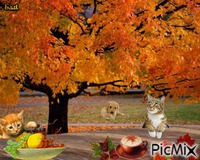 napos ősz