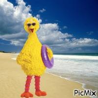Big Bird fun in the Sun