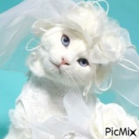 chats drôles avec perruques