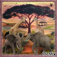 Africa - Contest
